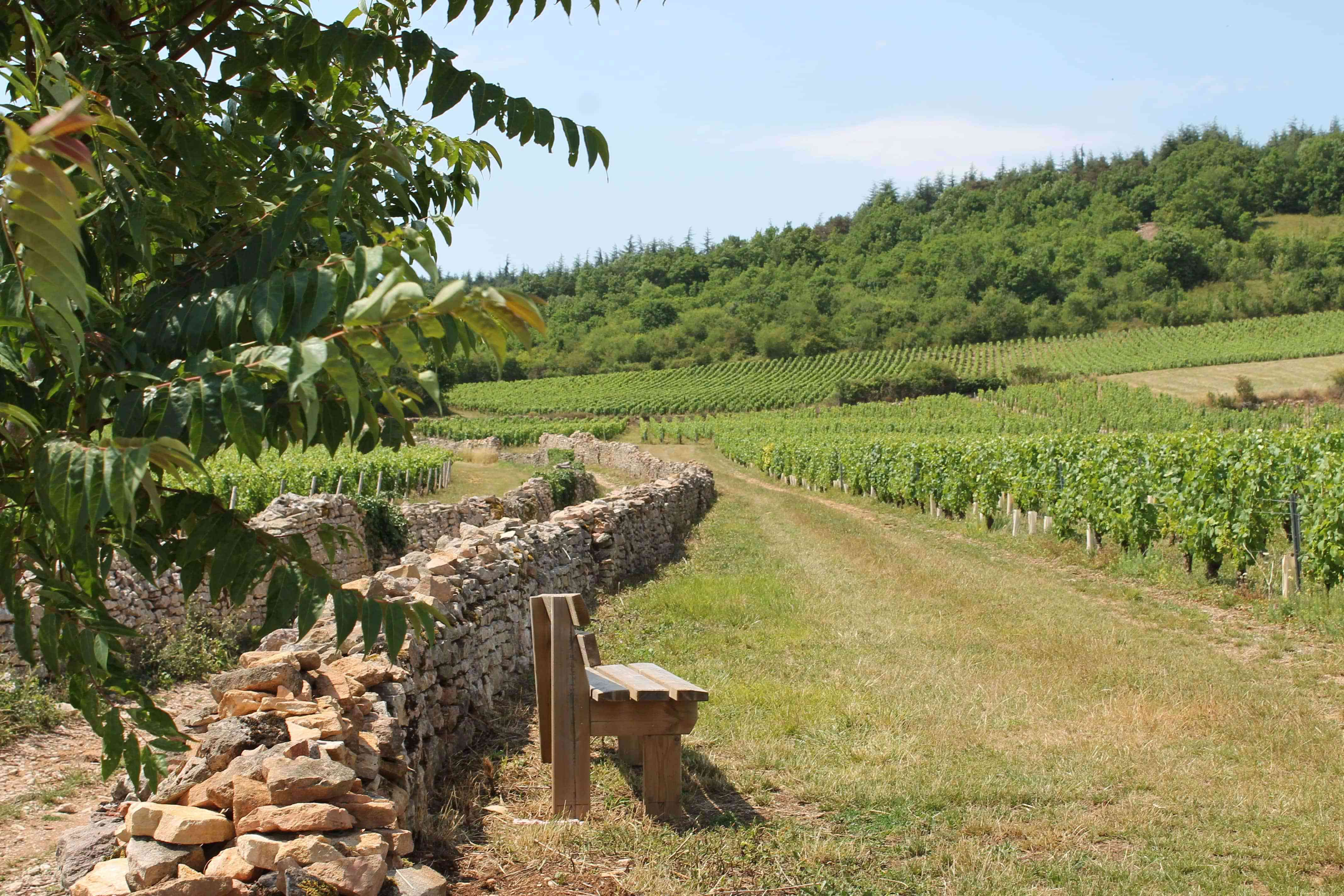 Givry-Cote-Chalonnaise-Bourgogne