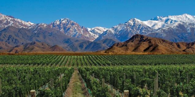 vins d'argentine